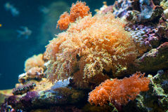 Coral Reef photos stock
