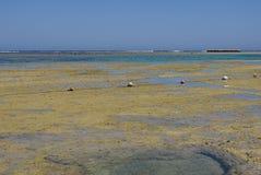 Coral Reef Fotografía de archivo