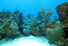 Coral Reef stockfoto