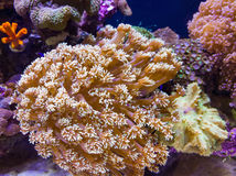 Coral Reef Royalty-vrije Stock Afbeelding