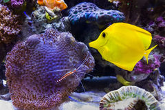 Coral Reef Stock Images
