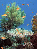 Coral reef. In the Red Sea in Egypt Stock Photography