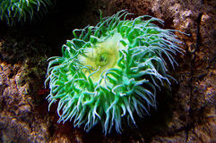 Coral reef Stock Photos