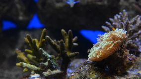 Coral Reef video d archivio