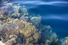 Free Coral Reef Stock Photos - 55258983