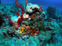 Coral Reef. This coral reef image was taken at Light hous lrdge reef off the coast of Pompano Beach, Florida Stock Photo