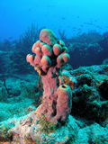 Coral Reef. This coral reef image was taken at Lighthouse ledge reef off the coast of Pompano Beach, Florida Stock Photo