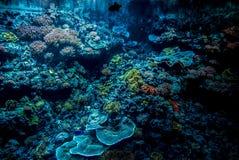 Coral Reef Imagenes de archivo