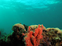 Coral Reef. This image was taken off the beach in Pompano beach, Florida. A place called 12th street Stock Photo