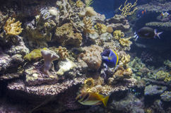 Coral Reef Fotografía de archivo libre de regalías