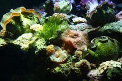 Coral Reef. A living coral reef underwater with giant clams and living rocks Stock Image