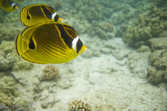 Coral Reef 605 Stock Images