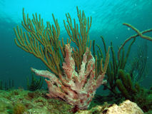 Coral Reef. This picture was taken at 12th street in Ft lauderdale, Florida right off the beach Stock Images