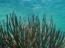 Coral Reef Fotos de archivo