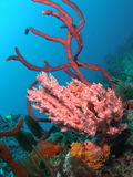 Coral Reef. This colorful coral was taken about 65 feet in Pompano beach, Florida stock photo