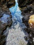 Coral Reef Fotos de archivo libres de regalías