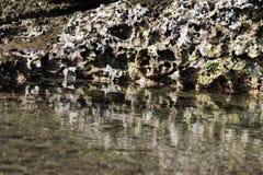 Coral Reef Fotografia Stock