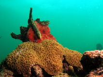 Coral Reef. This colorful coral was taken at 20 feet in south Florida Stock Photography