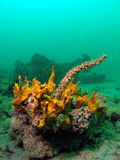 Coral Reef. This colorful coral was taken at 20 feet in south Florida Stock Photos