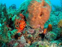 Coral Reef. This image was taken in 45 feet of water off the coast of south Florida Stock Image