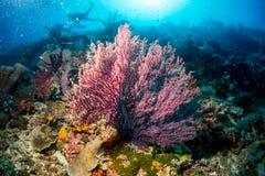 Coral Reef Immagini Stock