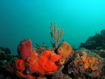 Coral Reef. This is coral taken at about 30 feet in Pompano beach, Florida Stock Image