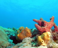 Coral Reef. Coral taken at 30 feet off the south Florida coast Royalty Free Stock Photography