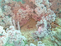 Coral Reef. Under the sea Royalty Free Stock Photography