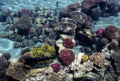 Coral Reef. View on coral reef in clear shallow water royalty free stock image
