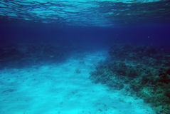 Coral Reef. Underwater scene of a tropical coral reef Stock Images