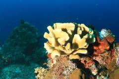 Coral Reef fotos de stock