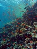 Coral Reef Arkivfoto