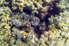 Coral Reef Fotografia Stock Libera da Diritti