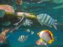 Coral Reef Lizenzfreies Stockbild