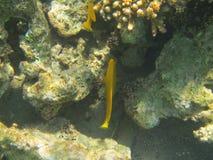 Coral Reef Royaltyfri Foto