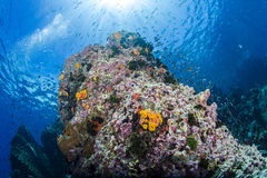 Coral Reef image stock
