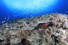 Coral Reef photographie stock