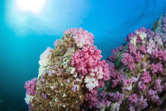 Coral Reef Immagine Stock