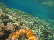 Coral Reef royalty-vrije stock foto's