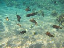 Coral Reef stock fotografie