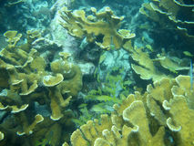 Coral Reef. Undersea view of structures in coral reef Stock Image