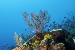 Coral Reef stock afbeeldingen