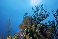 Coral Reef stock afbeelding