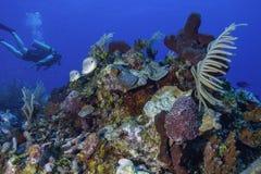 Coral Reef image libre de droits