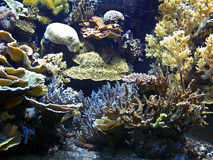 Coral reef. Biodiversity of plant life at Coral reef stock photos