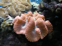 Coral Reef. Colourful Coral Reef , marine life Stock Photos