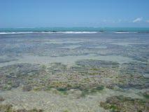 Coral Reef Images libres de droits