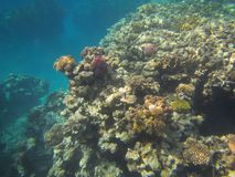 Coral Reef Stock Foto