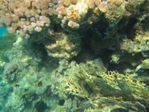 Coral Reef Royaltyfria Foton