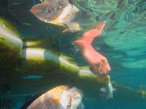 Coral Reef Lizenzfreie Stockbilder